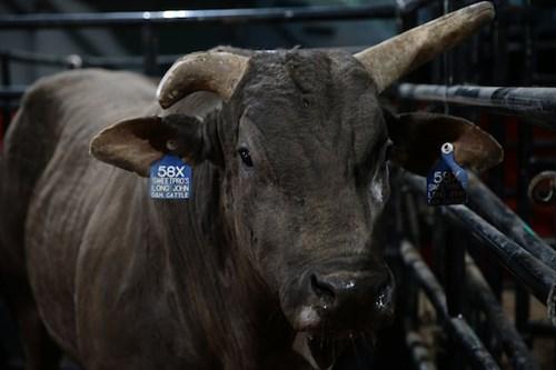 American Bucking Bull Inc Rip Long John